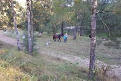 What! HORSES!!!